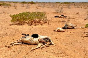 Carestia in Africa: la siccità del 2011 in Somalia
